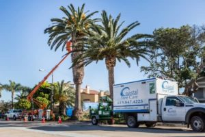 Urban Landscaping Tree Services
