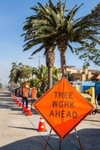 Landscaping and Tree Service, San Diego