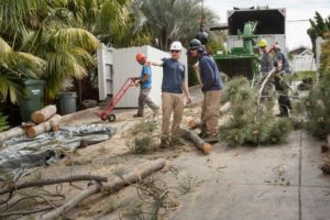 Tree Care by ISA-Certified Arborists